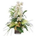 Orchids Elegance