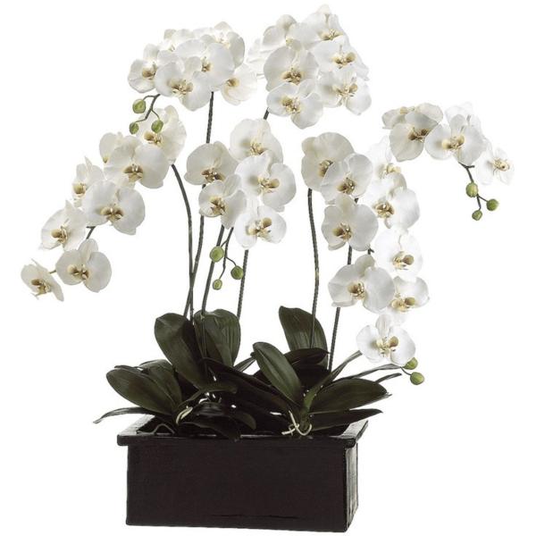 Phalaenopsis Elegant Orchid 6 stems