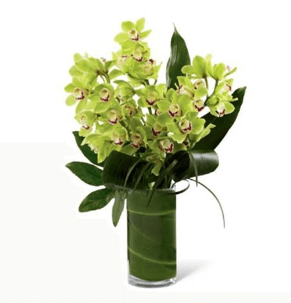 Orchid Splendour