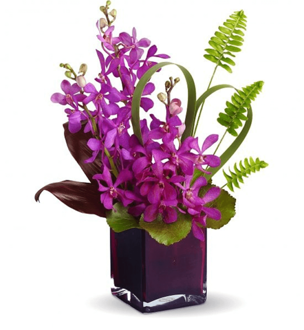 Dazzling Orchids