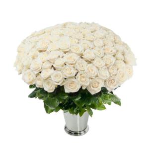 100 White Roses
