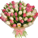 Pink and White Blush Tulips