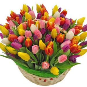 100 Bright Tulips