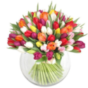 Rainbow of Tulips